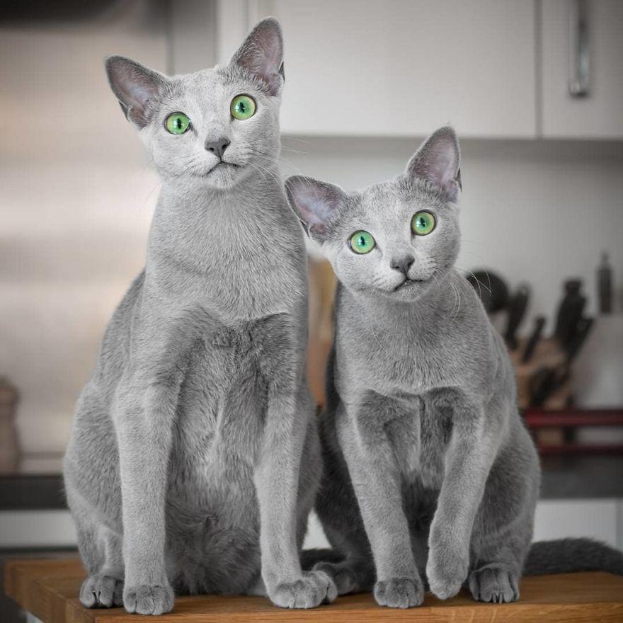 Pisicutele cu cei mai frumosi ochi din lume, in poze superbe - Poza 1