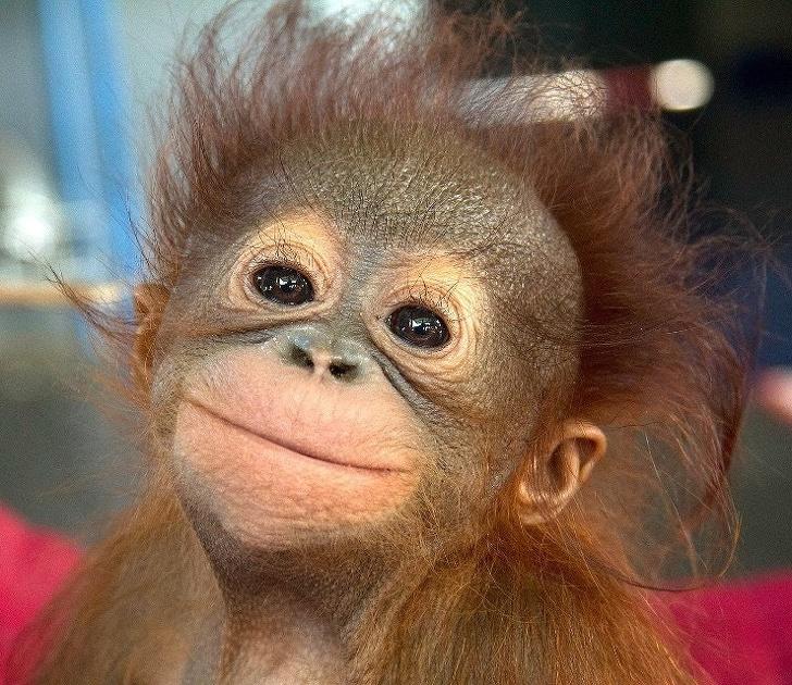 Cele mai expresive animale, in imagini haioase - Poza 14