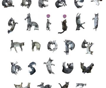 Alfabetul din pisici, de la NekoFont