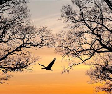 25 de fotografii cu frumoasa natura salbatica