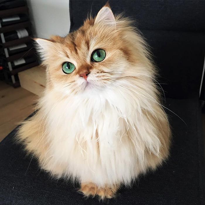 10+ Pisici superbe, in poze de colectie - Poza 2