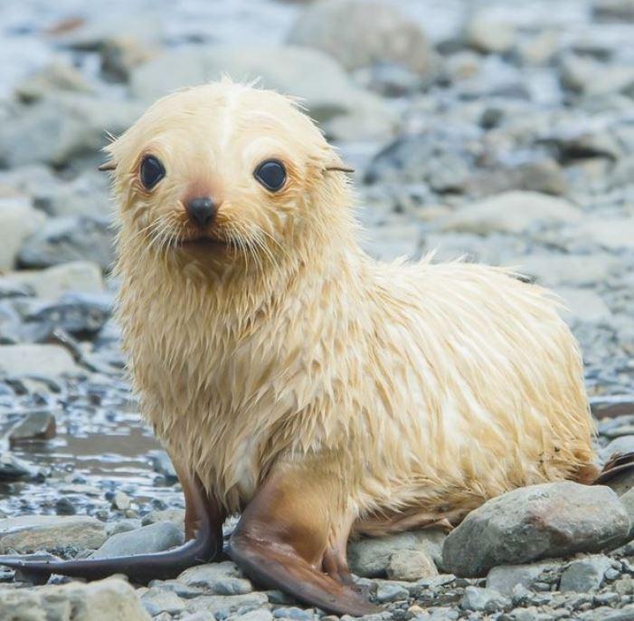 Cele mai simpatice animalute de la Polul Nord, in poze adorabile - Poza 3