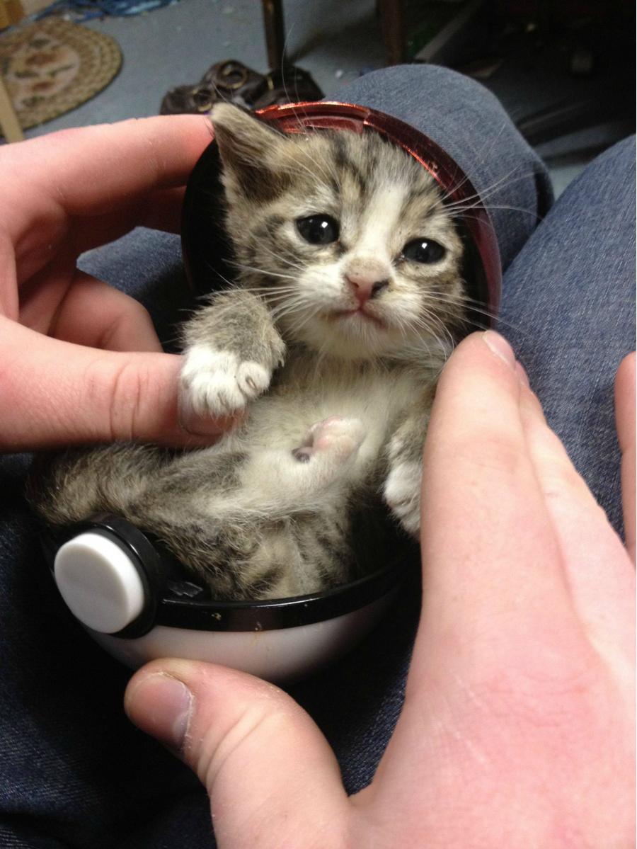 Cele mai dragute pisici din lume, in poze adorabile - Poza 10