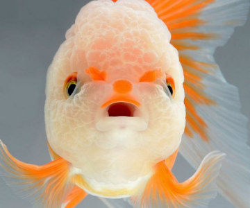 Portrete spectaculoase cu pesti de acvariu