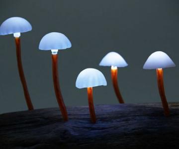 Ciuperci luminoase multicolore ce aduc magie in incaperi