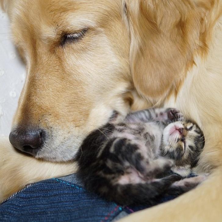 Cele mai prietenoase animale, in imagini induiosatoare - Poza 14