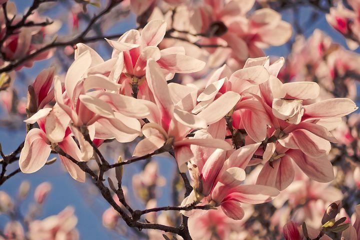 Splendoarea copacilor infloriti in poze superbe - Poza 2