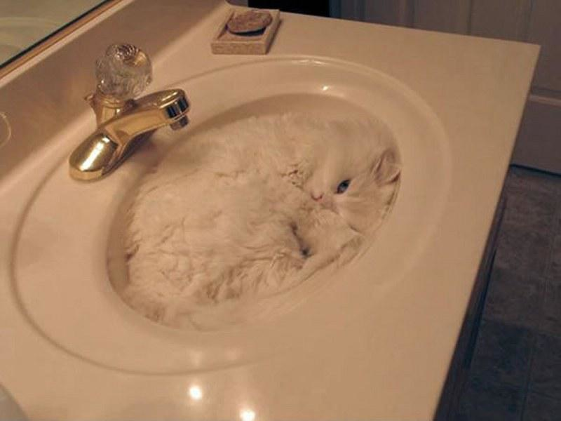 Pisici poznase ascunse in fel de fel de locuri - Poza 5