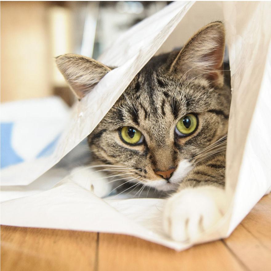 Cele mai frumoase poze cu pisici - Poza 28