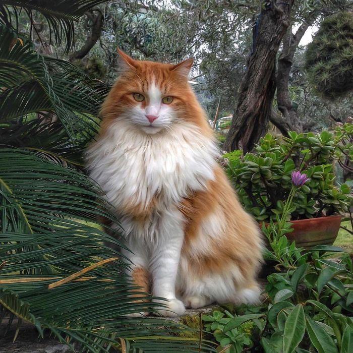 Viata de pisica, in poze adorabile - Poza 10