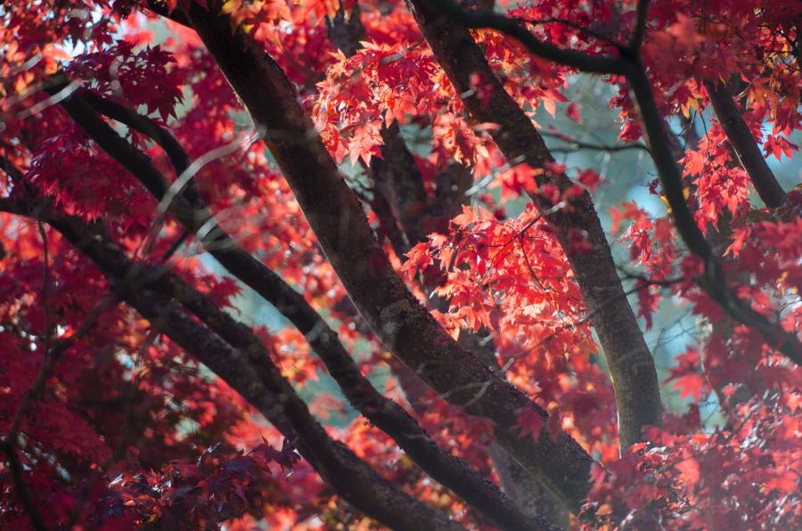 Cele mai frumoase peisaje de toamna, in imagini superbe - Poza 11