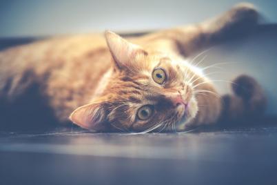 Ce face orice posesor de pisica in secret - Poza 2