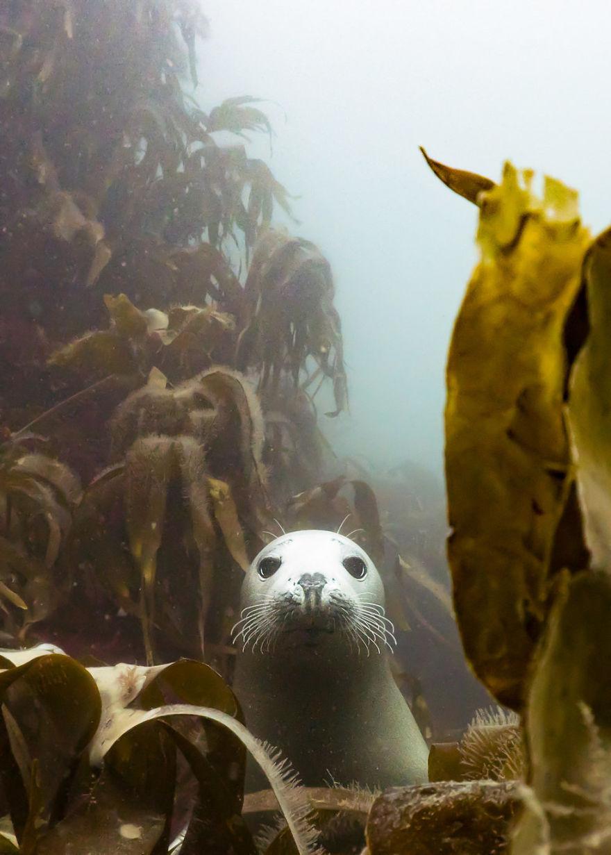 Fotografii superbe din uimitoarea lume subacvatica - Poza 2