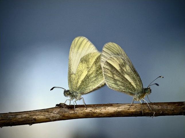 Natura la control, in 40 de poze - Poza 24