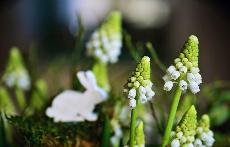 Gingasia florilor de primavara in poze superbe - Poza 10