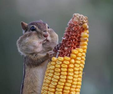 Premiile Comedy Wildlife: Poze amuzante cu animale salbatice
