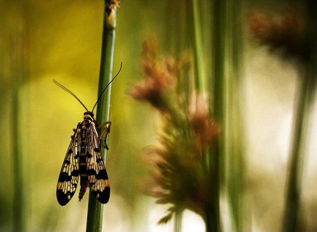 Natura la control, in 40 de poze - Poza 13