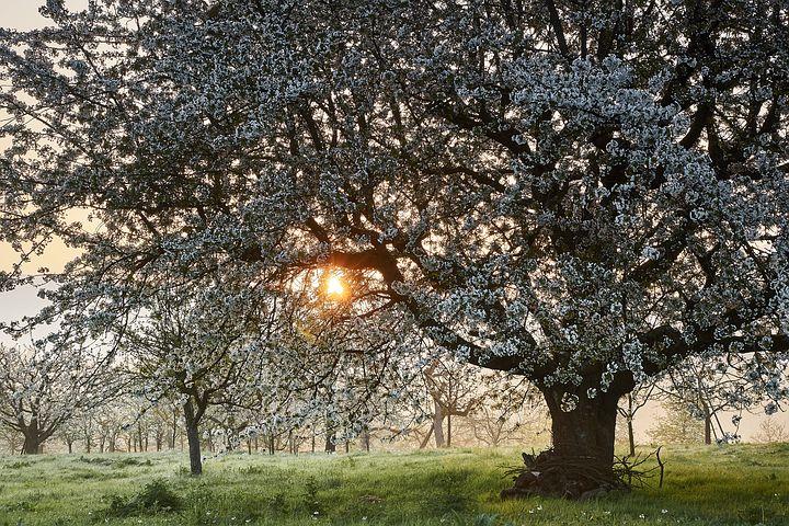 Splendoarea copacilor infloriti in poze superbe - Poza 9