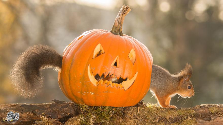 Frumoasa poveste cu veverite roscate, intr-un pictorial adorabil - Poza 3