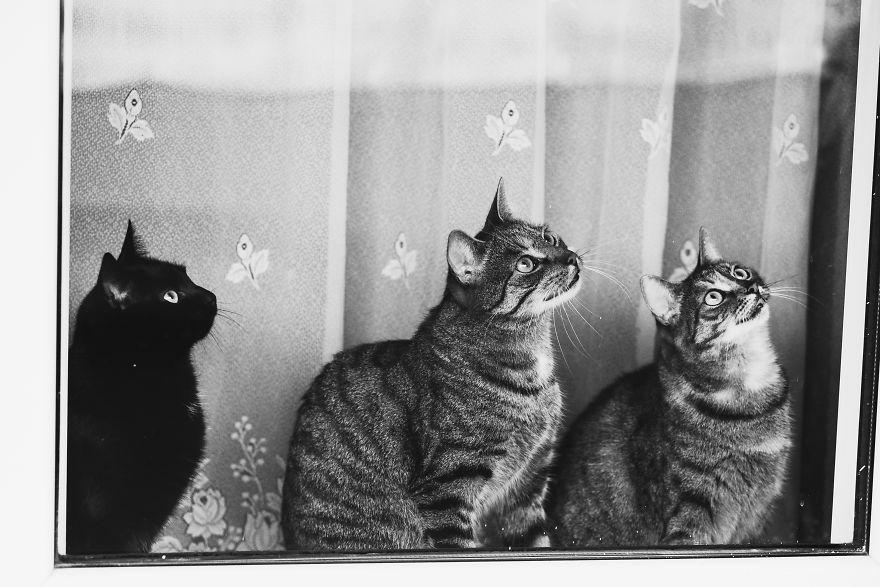 Pisici la fereastra, in poze alb-negru - Poza 18