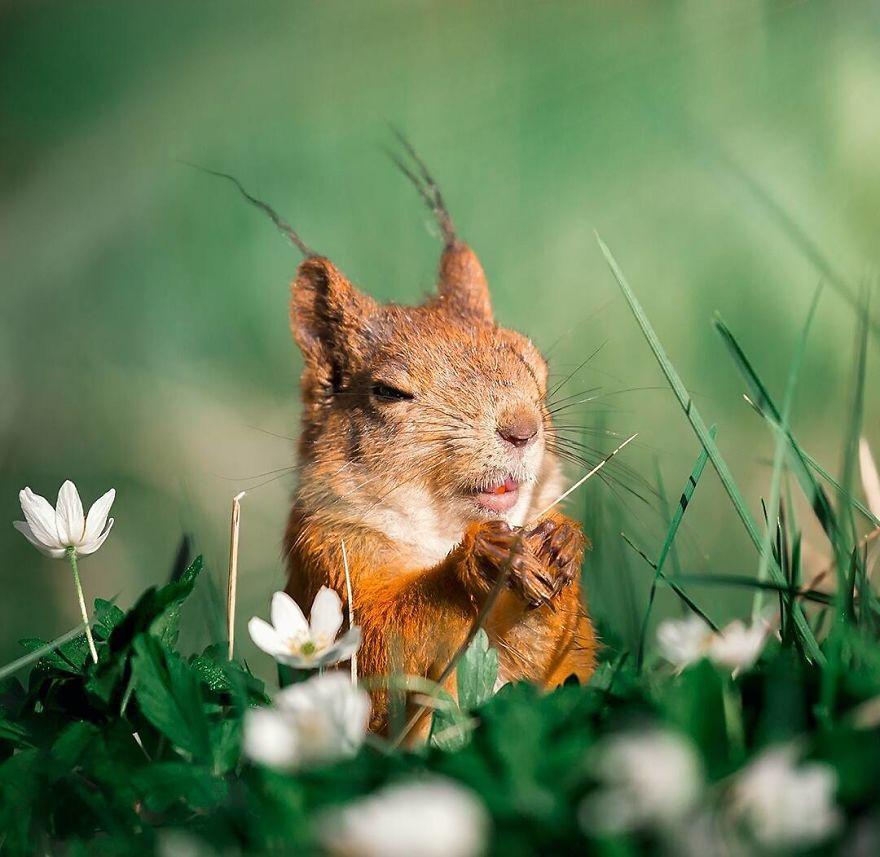 Padurile fermecate chiar exista! Poze superbe din sanul naturii - Poza 19