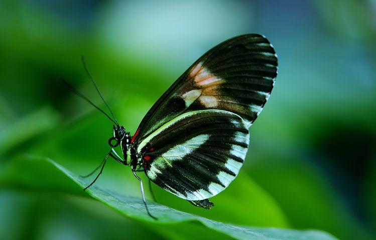 Cei mai frumosi fluturi din lume, in poze spectaculoase - Poza 9