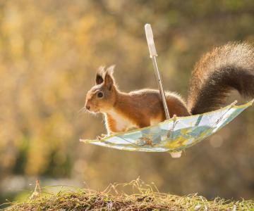 Frumoasa poveste cu veverite roscate, intr-un pictorial adorabil