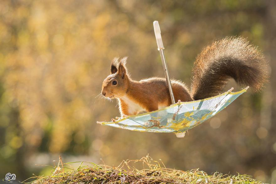 Frumoasa poveste cu veverite roscate, intr-un pictorial adorabil - Poza 1