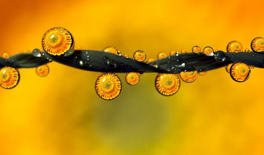 Cum se oglindeste frumusetea naturii in picaturi limpezi de apa - Poza 2