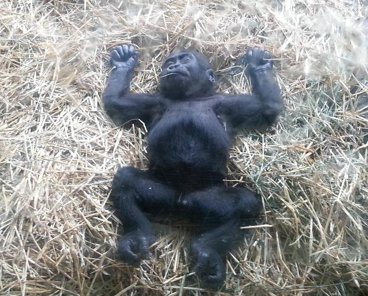 Cele mai simpatice animale lenese, in poze adorabile - Poza 12