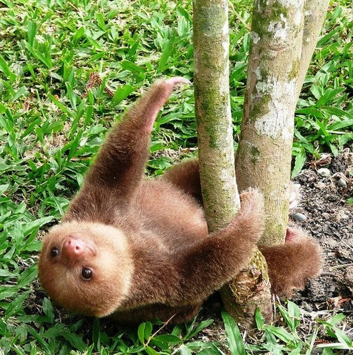 Cele mai simpatice animale lenese, in poze adorabile - Poza 18