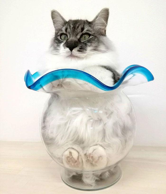 20+ Pisici contorsioniste, in poze haiose - Poza 14