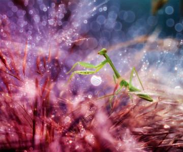 Lumea miraculoasa a insectelor, de Nordin Seruyan