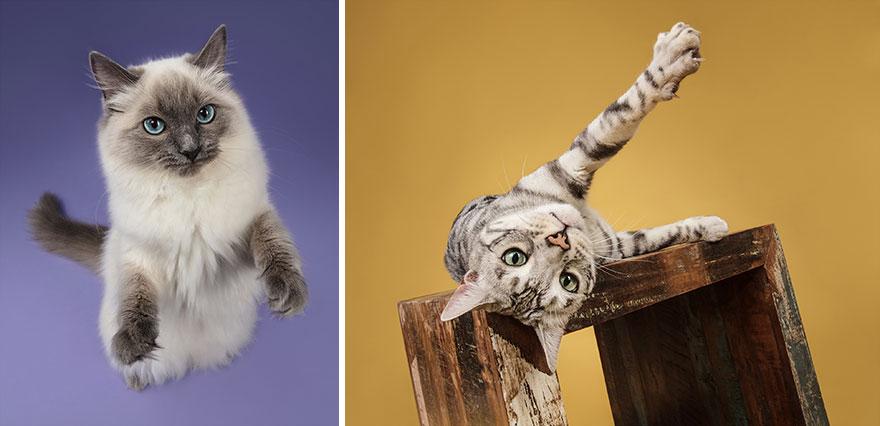 Cele mai frumoase pisici, intr-un pictorial atipic - Poza 5