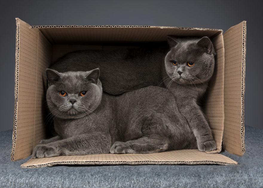 Cele mai frumoase pisici, intr-un pictorial atipic - Poza 9