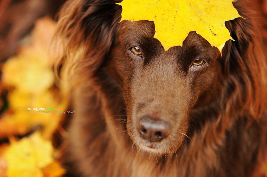Portrete autumnale de suflet, de Anne Geier - Poza 11