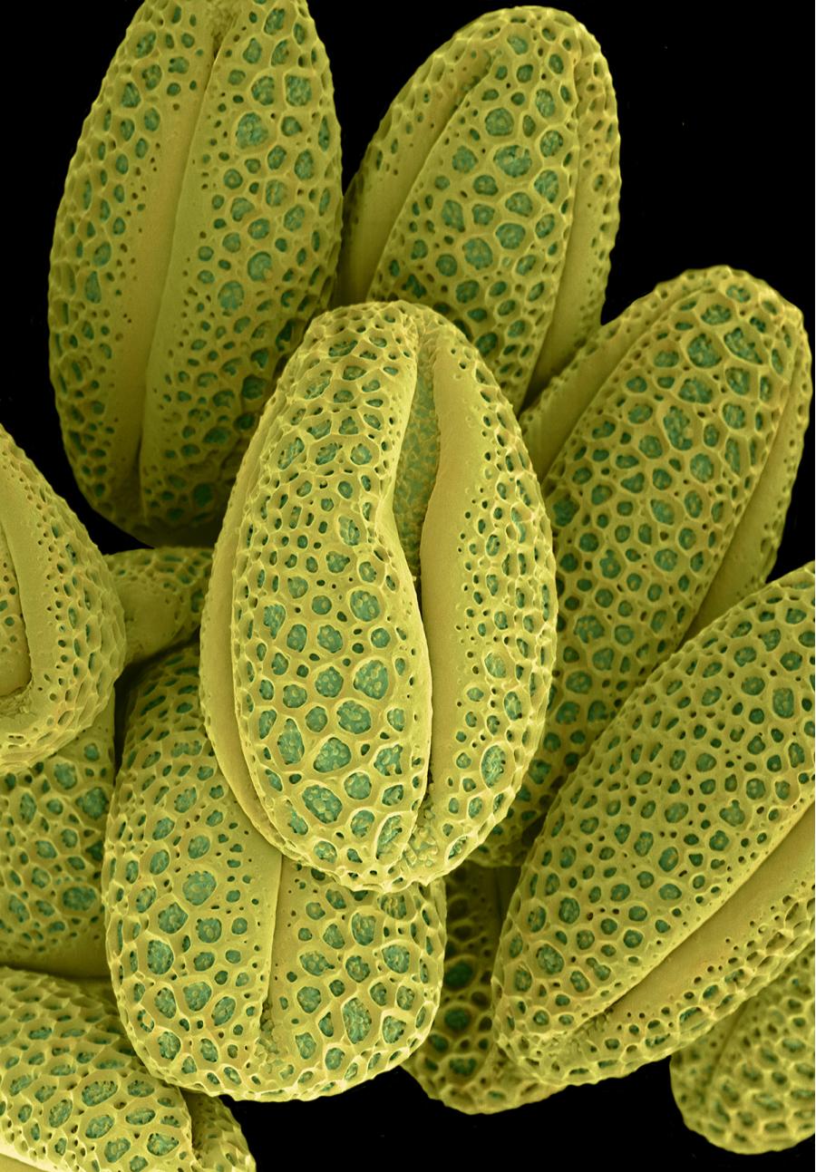 Intimitatea plantelor, in poze macro superbe - Poza 4