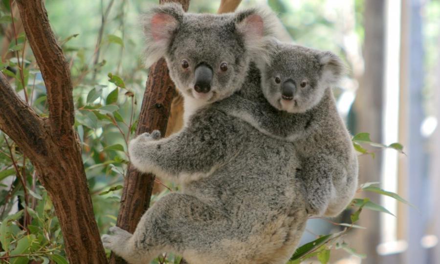 Cele mai dragute animale din lume, intr-un pictorial adorabil - Poza 5