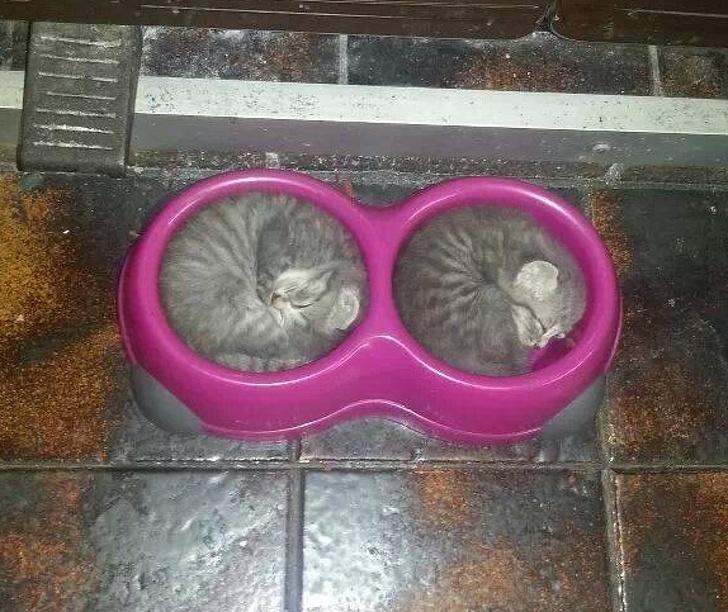 20+ Pisici adorabile si somnul lor nefiresc - Poza 21