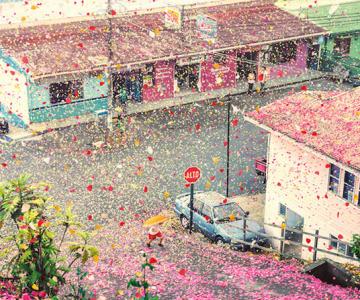 Costa Rica acoperita de petale pentru Sony Bravia