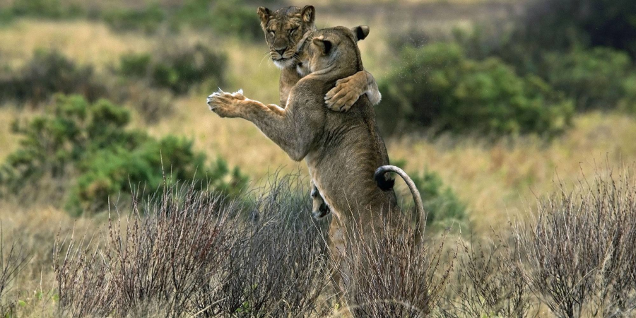 Dans si veselie: Animale haioase, in ipostaze unice - Poza 1
