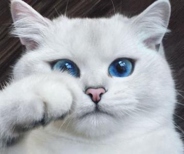 Pisicuta cu cei mai frumosi ochi din lume