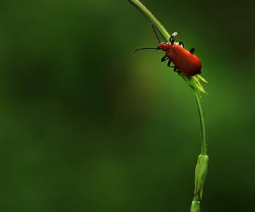 Natura la control, in 40 de poze