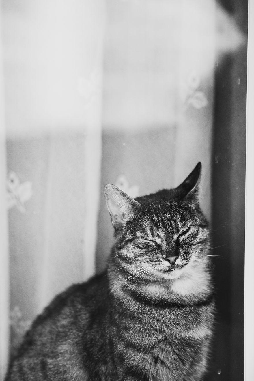 Pisici la fereastra, in poze alb-negru - Poza 17