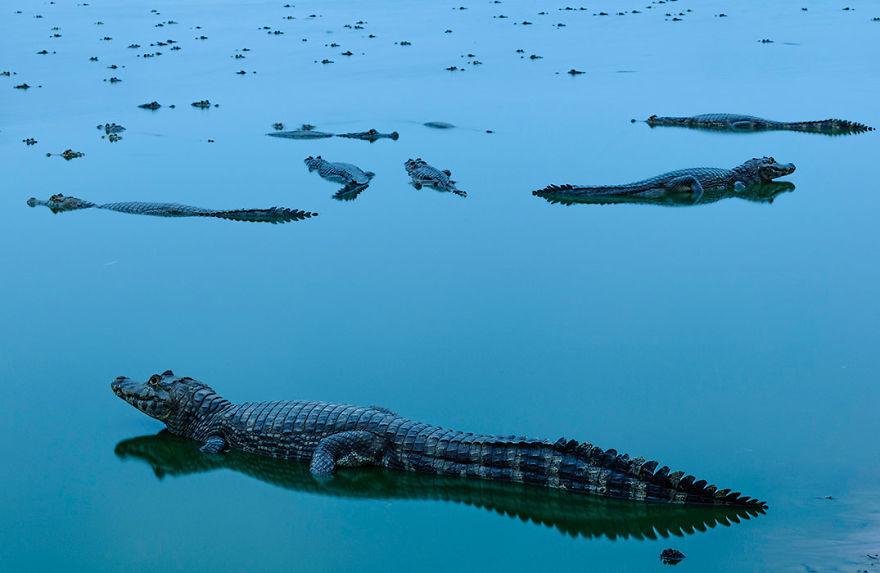 Concurs foto dedicat mediului: Splendoarea naturii, in poze uluitoare - Poza 14