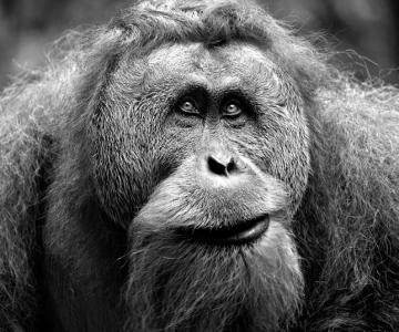 Natura cu personalitate - 42 de fotografii reprezentative