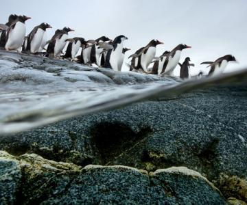 Super fotografii: Marile migratii