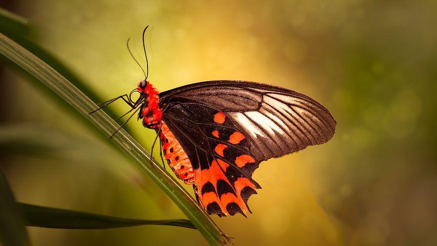 Cei mai frumosi fluturi din lume, in poze spectaculoase - Poza 8