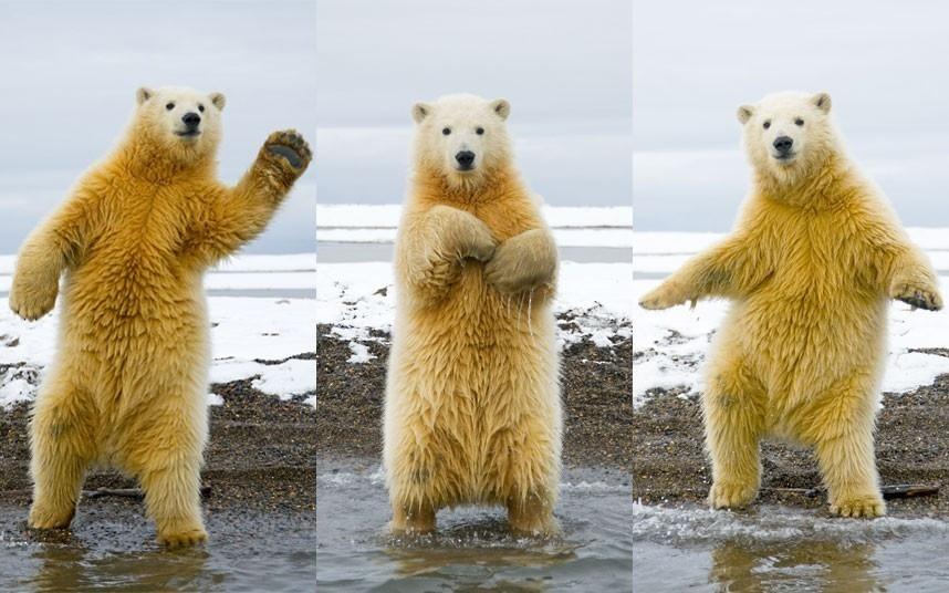 Dans si veselie: Animale haioase, in ipostaze unice - Poza 11