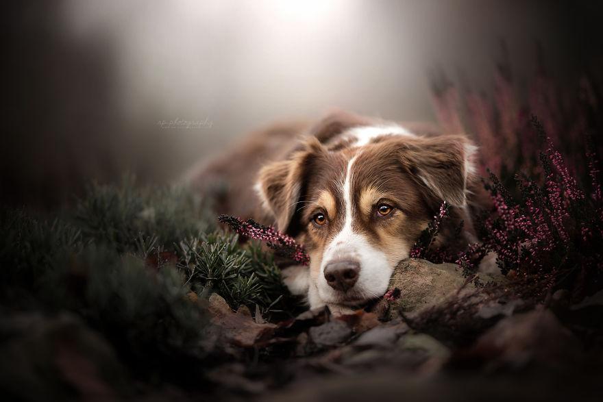 Bucuria sufletului frumos de caine, in poze superbe - Poza 6